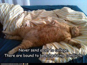 Never send a cat to college.   There are bound to be scheduling  conflicts.