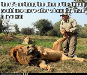 there's nothing the king of the jungle could use more after a long day than a foot rub