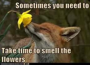 Even Foxes Know This