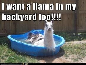 I want a llama in my backyard too!!!!