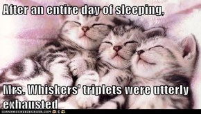 After an entire day of sleeping,  Mrs. Whiskers' triplets were utterly exhausted