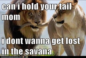 can i hold your tail mom  i dont wanna get lost in the savana
