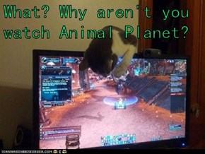 What? Why aren't you watch Animal Planet?