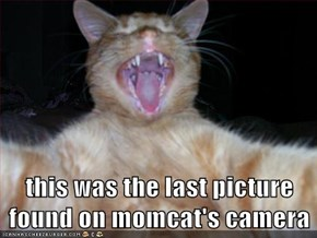 this was the last picture found on momcat's camera