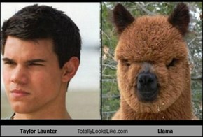 Taylor Launter Totally Looks Like Llama