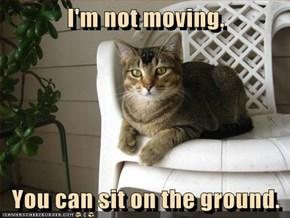 I'm not moving.  You can sit on the ground.
