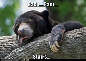 Gasp....Pant....  Stairs......