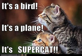 It's a bird! It's a plane! It's   SUPERCAT!!