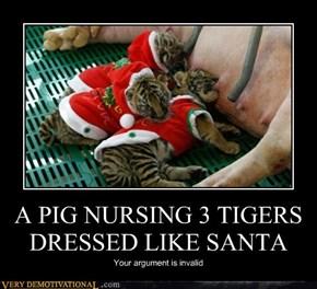 A PIG NURSING 3 TIGERS DRESSED LIKE SANTA