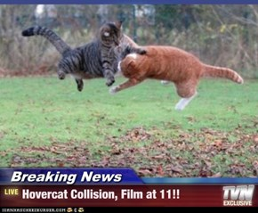 Breaking News - Hovercat Collision, Film at 11!!