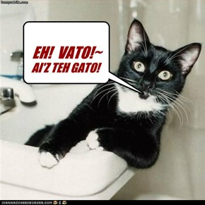 EH!  VATO!~