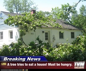 Breaking News - A tree tries to eat a house! Must be hungry.