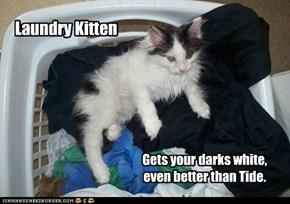 Laundry Kitten