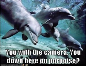 You with the camera. You down here on porpoise?