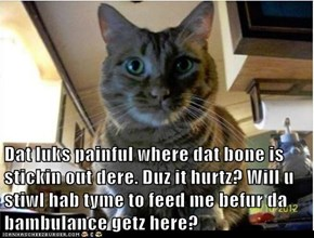 Dat luks painful where dat bone is stickin out dere. Duz it hurtz? Will u stiwl hab tyme to feed me befur da bambulance getz here?