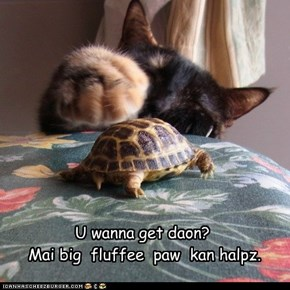 U wanna get daon?    Mai big  fluffee  paw  kan halpz.
