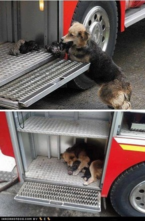 Mother Dog After saving her puppies from a house fire, mama dog brings them to the safest place she can think of