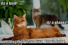 itz a bird! itz a planez! no, sorryz. itz just a bird. But itz MINE.