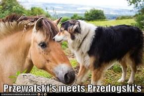 Przewalski's meets Przedogski's