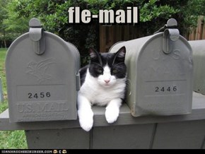 fle-mail