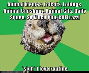 Animal Memes, Lolcats, Loldogs, Animal Capshunz, Animal Gifs, Daily Squee, So Much Pun, ROFLrazzi  *sigh* I love routine