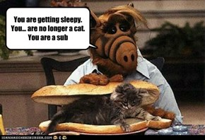 Willie: what's going on out there? alf: nothing, just screaming