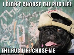 I DIDN'T CHOOSE THE PUG LIFE  THE PUG LIFE CHOSE ME