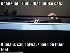 Noone told Fluffy that, unlike cats,  Humans can't always land on their feet.