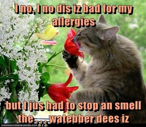 I no, I no dis iz bad for my allergies  but I jus had to stop an smell the . . . watebber dees iz