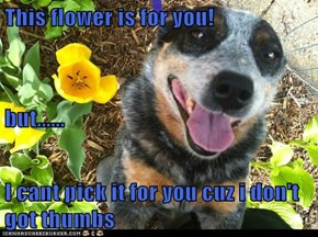 This flower is for you! but...... I cant pick it for you cuz i don't got thumbs