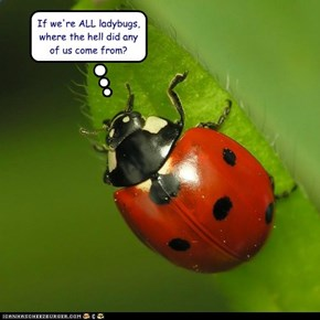 If we're ALL ladybugs, where the hell did any of us come from?