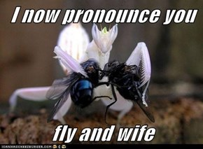 I now pronounce you  fly and wife