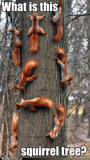 Squirrel to Tree Ratio 8/1