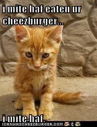 i mite haf eaten ur cheezburger...  i mite haf.