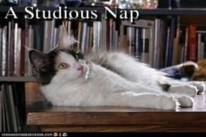 A Studious Nap