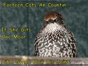 Forteen Cats An Countin... If She Gits                       One Moar Aihm Gonna Blow Dis Joint!