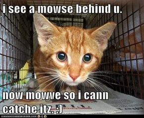 i see a mowse behind u.  now mowve so i cann catche itz. :)