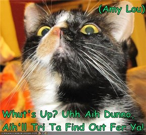 (Amy Lou)  Whut's Up? Uhh Aih Dunno, Aih'll Tri Ta Find Out Fer Ya!