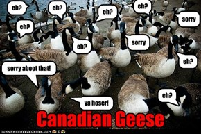 Canadian Geese, eh?