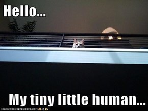 Hello...  My tiny little human...