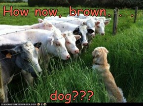How now, brown. . .  dog???