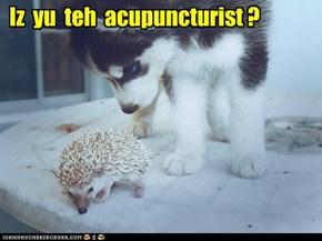 Iz  yu  teh  acupuncturist ?