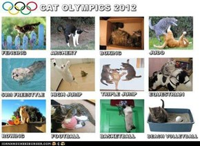Cat Olympics 2012