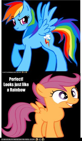Wait till the rest of the Rainbow Dash Fanclub sees this