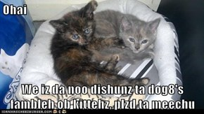 Ohai  We iz da noo dishunz ta dog8's fambleh ob kittehz, plzd ta meechu