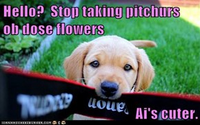 Hello?  Stop taking pitchurs ob dose flowers  Ai's cuter.