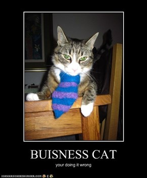 BUISNESS CAT