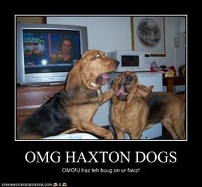 OMG HAXTON DOGS