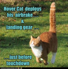 Hover Cat  deploys his  airbrake . . .  & landing gear  . . .