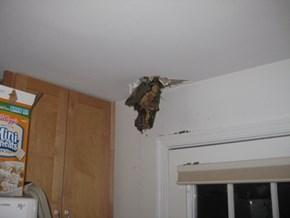 Ceiling fail